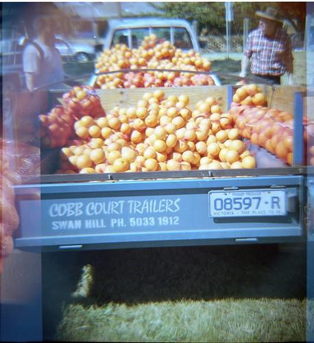 cobbcourt oranges