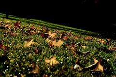 """""""It's Fall!"""""""