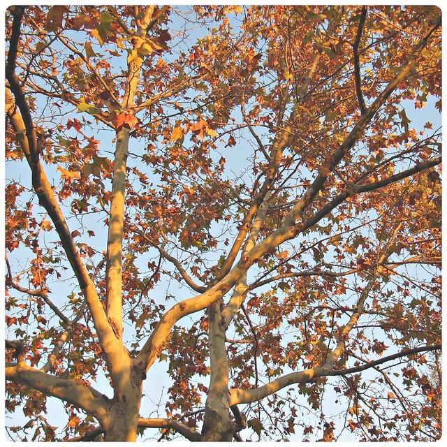 ~ autumn serie ~ 4 ~