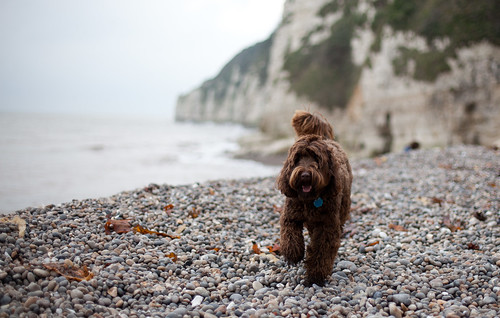 Ewok on the beach