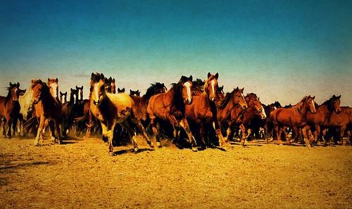 pws horses edit