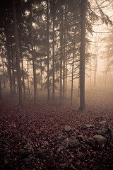 misty forest (kubais) Tags: wood mist tree misty fog forest foggy autumngupr