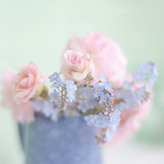 Monday prettiness (borealnz) Tags: pink flowers blue roses texture floral square focus soft pretty dof girly jug vase romantic forgetmenot bud arrangement prettiness gentle bsquare cecilebrunner floralarrangment flypapertextures borealnz