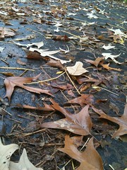 """Why it's called """"Fall"""" (3 Stairs) Tags: wednesday wordless"""