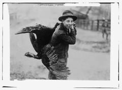 Happy Thanksgiving! (KurtClark) Tags: thanksgiving blackandwhite turkey libraryofcongress 1910 publicdomain