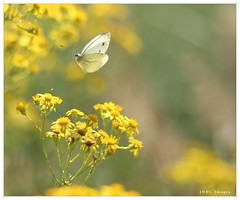 butter.fly (chtimageur) Tags: butterfly papillon vlinder nature macro summer flying bokeh canon6d canon8518