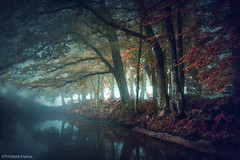 Moody forest! (pat.thom974) Tags: trees fog forest morning red autumn water reflection