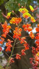 P1030530 (Surender Bodhireddy) Tags: nature welltaken fineshot fantasticflower onlyyourbestshots ilovemypic onlythebestare mothernatureatherbest bestnaturetnc07 flowersarefabulous thepoweroftheflower