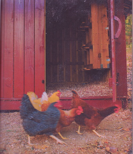 chickencanning_0010