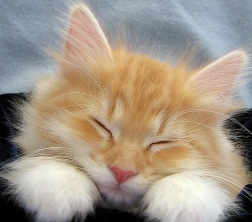 光看就想睡的貓特集2