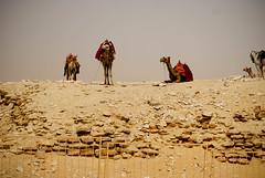 Mid day break (Zeepster`) Tags: africa desert egypt cairo heat camels