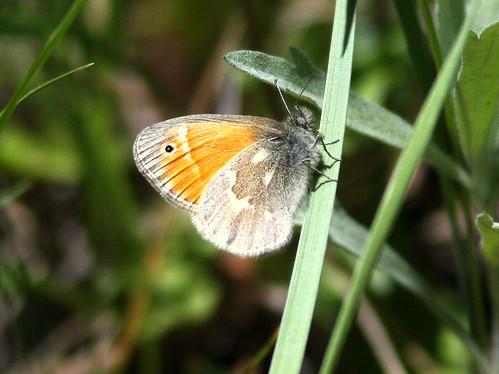 Butterfly 20100617