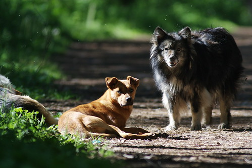 Stray dogs in the forest