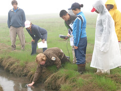 Learning how to measure salinity in a salt marsh by U. S. Fish and Wildlife Service - Northeast Region, on Flickr