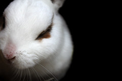 Ashamed.. (Gemma Malenoir) Tags: pet white cute rabbit animal closeup canon dark fur eos remember shadows whiskers domestic animalplanet meaning fliss 500d