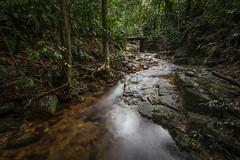 HDR - Mata Atntica - retalhos de uma poesia quase extinta  /  Atlantic Rainforest - scraps of poetry almost extinct  VIII (Marcus Vinicius Lameiras) Tags: parque nature rain brasil forest canon rive