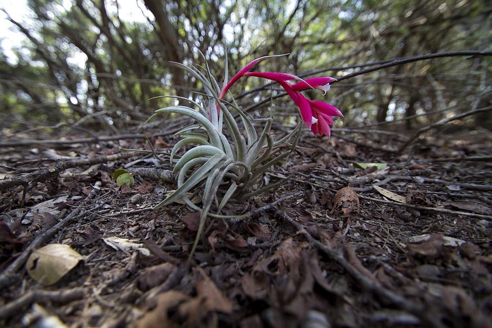 Una planta florece en el agreste clima chaqueño. (Tetsu Espósito - Fortín Boquerón, Chaco, Paraguay)