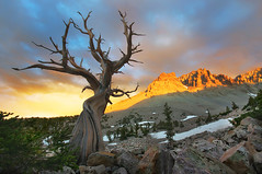 Great Basin Bristlecone (parkflavor) Tags: nevada wheelerpeak bristleconepine greatbasinnationalpark leefilters gbnp 6gnd