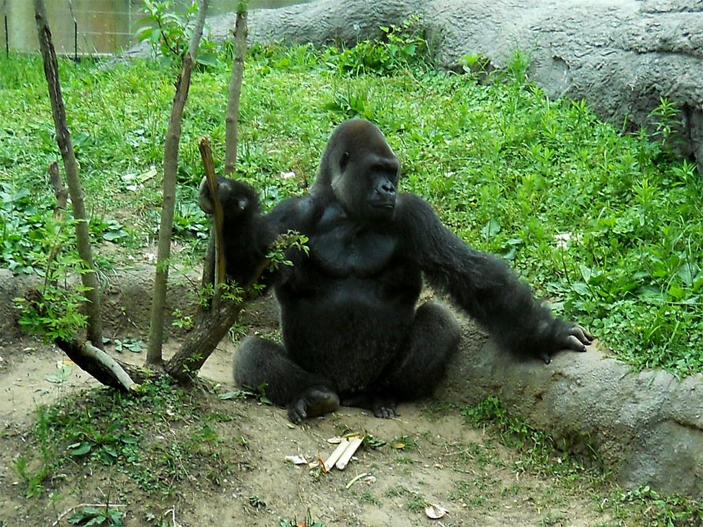 Zoo2010_025