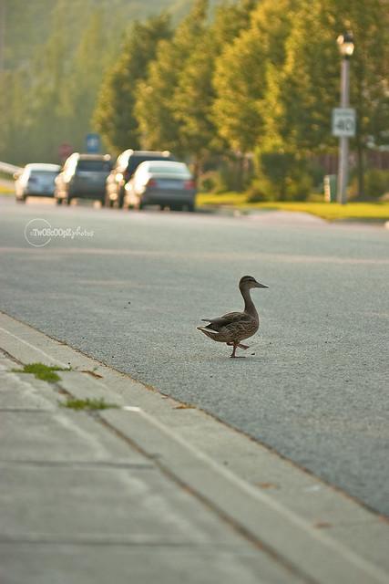 quack! day 187 (8)