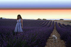 Purplexed (! .  Angela Lobefaro . !) Tags: trip travel friends sunset vacation portrait dog chien pet france love girl beautiful field animal cane puppy landscape countryside europe peace purple action country feld violet lavender peaceful hond lila perro hund lilac cachorro poodle bichon provence viola lavande fille filhote mascota perrito ragazza bolognese lilla hachiko provenza whitedog lavanda cagnolino allegri valensole provencealpescotedazur natuzzi hokhiko holidaysvacanzeurlaub angelamlobefaro gettyvacation2010 meetingallegri