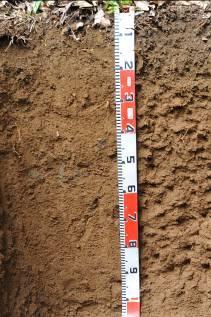 蘭嶼的低海拔森林土壤(右)則受制於高溫,有機物分解殆盡,土壤表面並無明顯的腐植層。潮溼高溫條件下,土壤礦物受到強烈風化,各類鹽基被洗出,只殘留溶解度低的氧化鐵,形成典型的深紅色。即使熱帶土壤欠缺明顯的腐植層,土壤中的腐植質仍然扮演重要的功能。