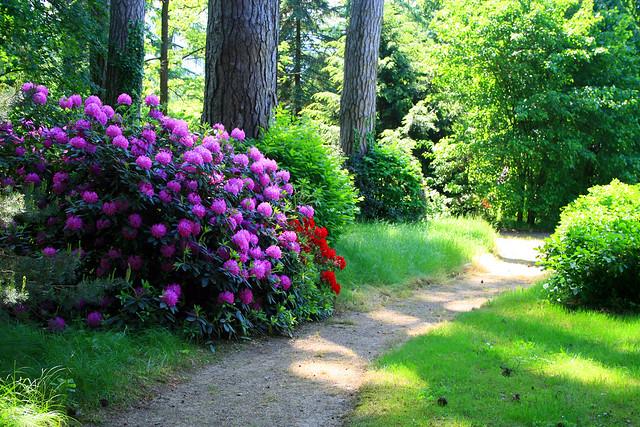 Il grande parco giardino del Castello di bagnolo Piemonte con fioritura di rododendri e azelee