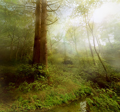 Enchanted Woodland (Ryan McGuinness Photography) Tags: sun sunlight colour beautiful forest lens rainbow fineart digitalart flare photomontage dreamy northwestengland ryanmcguinness photographlikeapainting bestcapturesaoi inspiredbyrenaissancemasters 100hoursoneimage