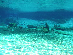 Underwater in the Headspring area