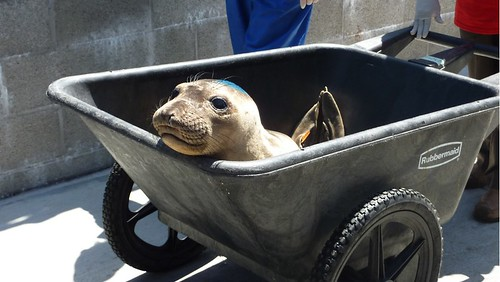 Volunteering at The Marine Mammal Center