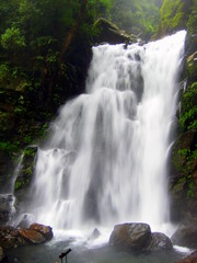 prowl (themargi) Tags: india waterfalls karnataka kudremukh southindia westernghats ghats sahyadri hanumangundi westernghast