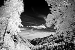 Infrared Valley (bogenfreund) Tags: trees clouds wolken valley infrared leafs bltter bume tal infrarot e4500