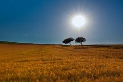 Sonne und so... (fraggaa) Tags: trees sun field sunshine canon landscape tokina 1224 40d