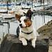 "52 Weeks For Dogs: 28/52 ""Eagle Harbor Marina"""