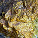 Rock365 : 12 07 2010 : Orpiment