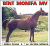 Bint Monifa MV for sale (Connection Art - Guilherme Ariza Bento) Tags: horses kyle for al jon desert sale united dream el emirates arab obrien carter arabian abbas majed pasha ibn bint بن arabianhorses سلطان الأمير سلمان moniet sachra alshehri shaklan rooneypitts nefous