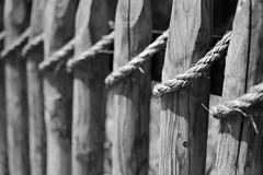(MoeDW) Tags: blakandwhite fence rope