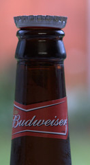 17072010 (Day 198)  King of Beers (dutts303) Tags: brown beer glass project neck bottle drink bokeh beverage down cap alcohol crown 365 bud budweiser upside upturn