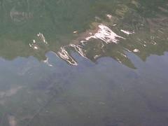 Reflection in Buckhorn Lake.