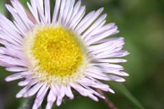 wildflowers 041