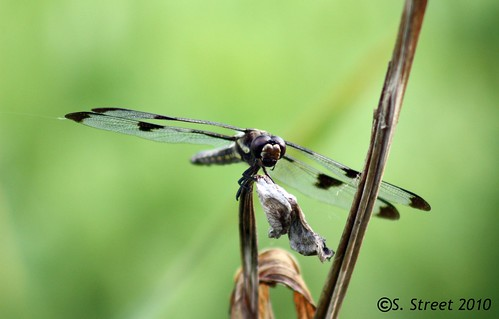 Dragonfly.....