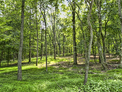 Summer Woods, Take 3