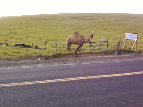 camel on bailey rd