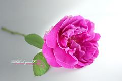 (Halah Al-yousef ||||) Tags: macro 50mm sony 200 2010   halah       macro50mm    dslra200  alyousef