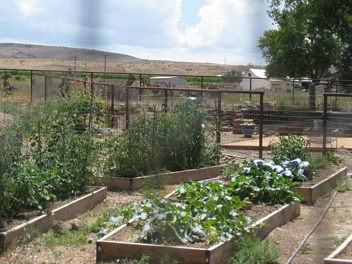Chicken's view of the garden