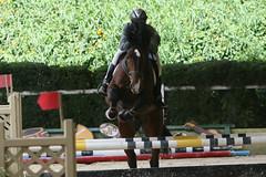(rdlt) Tags: horses horse sports caballo caballos jumping action equestrian hipica equitacion
