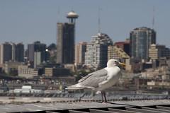 20100725_Seattle_099 (falconn67) Tags: seattle travel vacation sports boston washington baseball stadium gull redsox mariners safeco spaceneedle safecofield mlb 30d