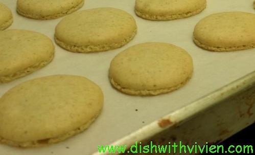 closed-up-pistachio-macaron