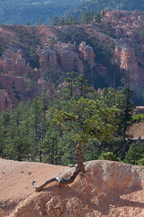 baudchon-baluchon-bryce-canyon-5865170710