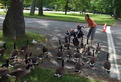 Attack of the mutant killer geese!